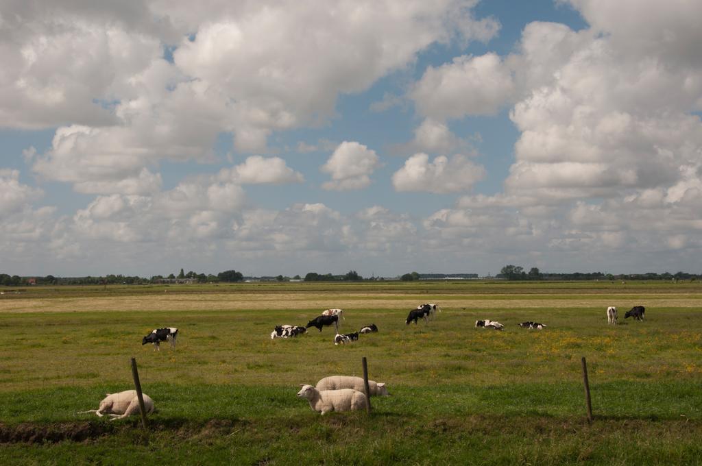 Midden Delfland